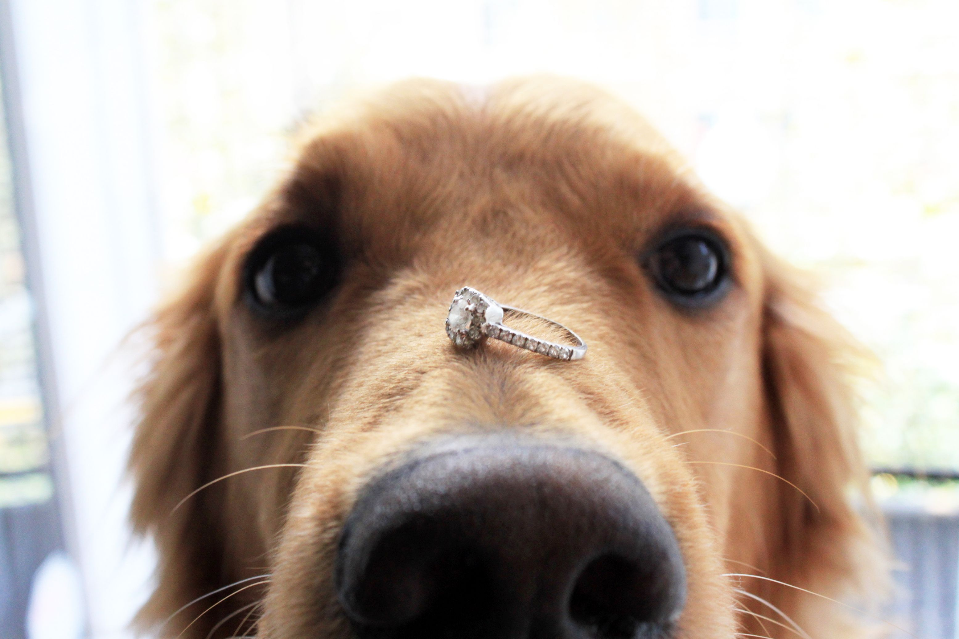 Dos and Don'ts of Incorporating Animals into Proposals ...