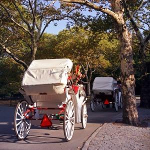 dallas-romantic-carriage-ride-proposal-l